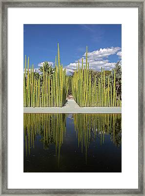 Mexican Fence Post Cacti Framed Print by Jim West