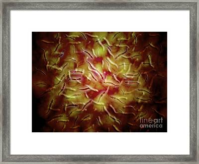 Microscopic View Of Sperm Framed Print by Stocktrek Images