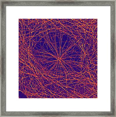 Microtubules Framed Print by Ammrf, University Of Sydney