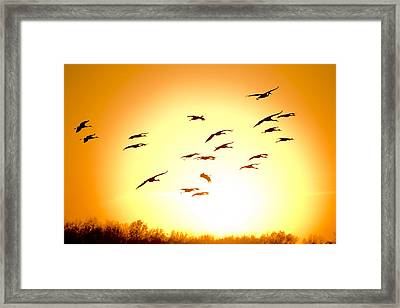 Migration Framed Print by Alexey Stiop