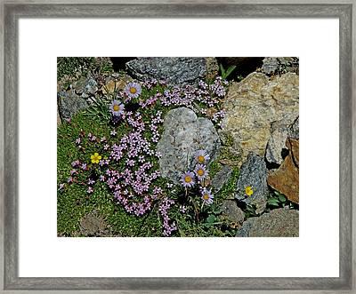 Miniature Rock Garden Framed Print by George Tuffy