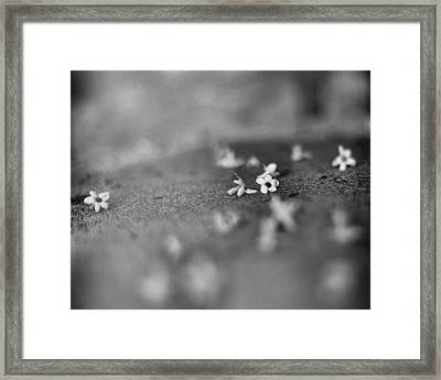 Modesty Framed Print