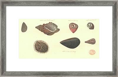 Molluscs Framed Print