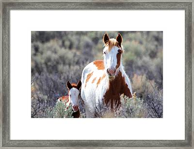 Momma And Baby In The Wild Framed Print