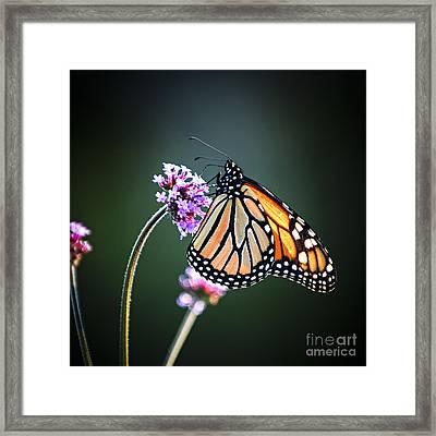 Monarch Butterfly Framed Print by Elena Elisseeva
