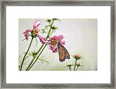 Monarch Framed Print