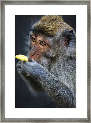 Monkey - Bali Framed Print by Matthew Onheiber