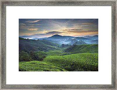 Morning At Cameron Highlands Framed Print