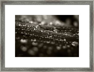 Morning Dew Framed Print by Bob Orsillo