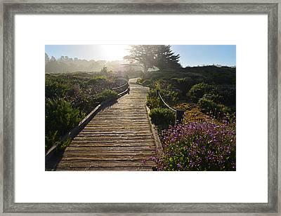 Morning Glory Framed Print by Lynn Bauer