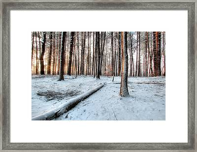 Morning Sun Framed Print by Andrea Galiffi