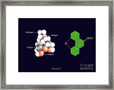 Morphine Molecule Framed Print by Francis Leroy, Biocosmos