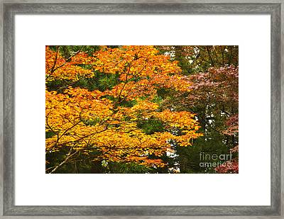 Mount Koya Koya San Japan  Framed Print