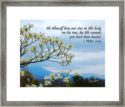 Mountain Dogwood Framed Print