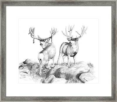 2 Muley Bucks Framed Print