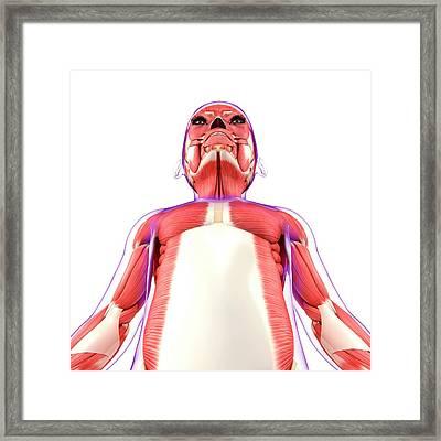 Muscular System Framed Print by Pixologicstudio