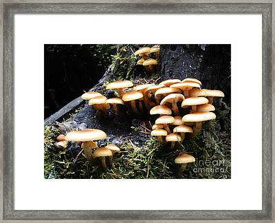 Framed Print featuring the photograph Mushrooms On A Stump by Chalet Roome-Rigdon