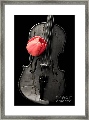 Music Lover Framed Print by Edward Fielding