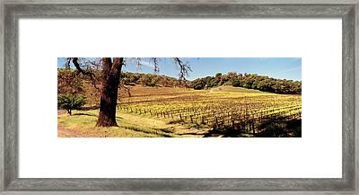 Mustard Flowers In A Field, Napa Framed Print