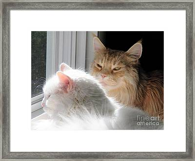 My Eyes Adore You Framed Print by Judy Via-Wolff