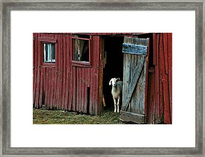 My Little Friend Framed Print by Diana Angstadt