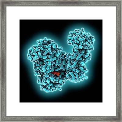 Nad-dependent Dna Ligase Molecule Framed Print by Laguna Design