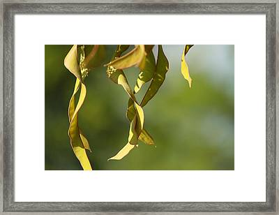 Natural Framed Print by Tinjoe Mbugus