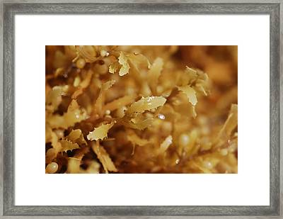 Nature  Framed Print by Andrada Anghel