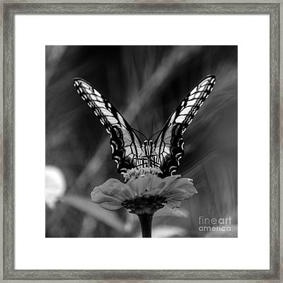 Nature Looking Glass  Framed Print by Donna Brown