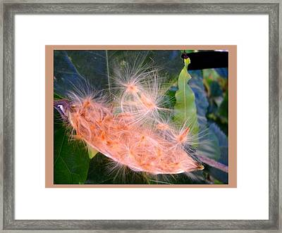 Nature's Mystery  Framed Print