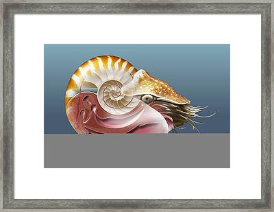 Nautilus, Artwork Framed Print by Science Photo Library