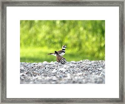 Nesting Killdeer Framed Print