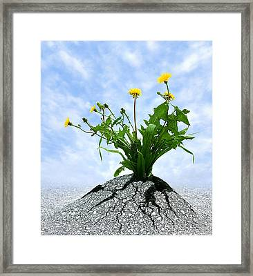 Never Give Up Framed Print by Dreamland Media