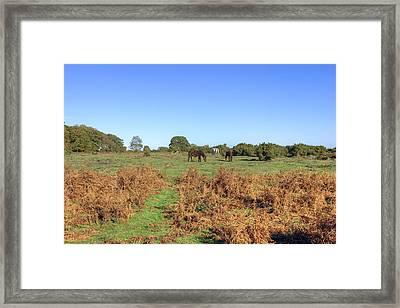 New Forest Framed Print by Joana Kruse