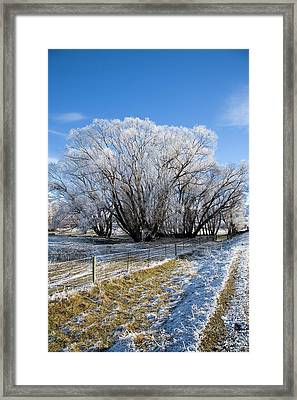 New Zealand, South Island, Central Framed Print by David Wall