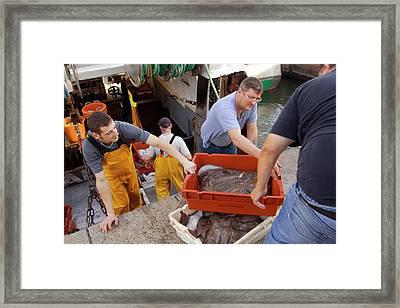 Night Trawler Framed Print