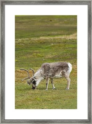 Norway Svalbard Bellsund Camp Millar Framed Print