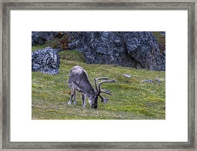 Norway, Svalbard, Prins Karls Forland Framed Print