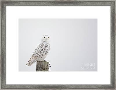 Observant Framed Print