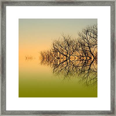 Olive Branches Framed Print by Sharon Lisa Clarke
