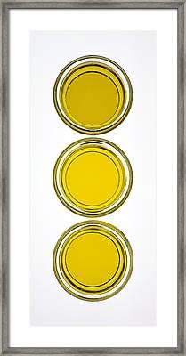 Olive Oil Framed Print by Frank Tschakert