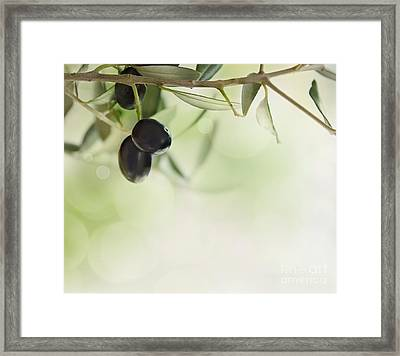 Olives Design Background Framed Print by Mythja  Photography