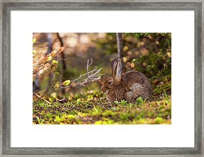 Olympic National Park, Hurricane Ridge Framed Print