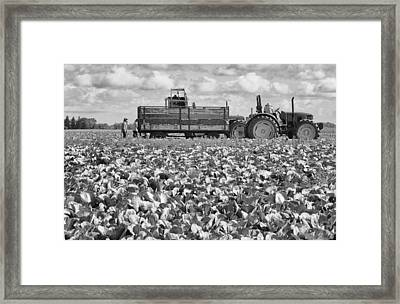 Framed Print featuring the photograph On The Farm by Ricky L Jones