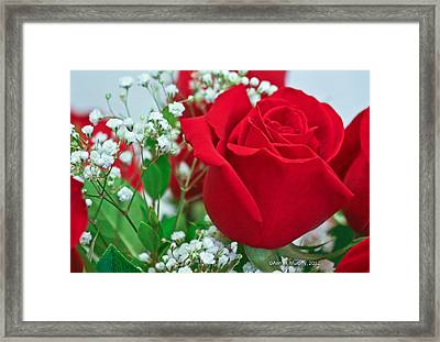 One Red Rose Framed Print by Ann Murphy