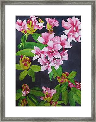 Opening Day Framed Print by Sylvia Dorling