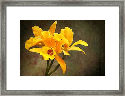 Orange Spotted Lip Cattleya Orchid Framed Print