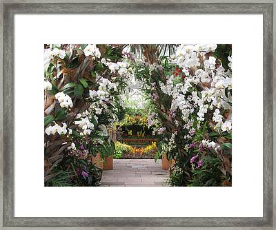 Orchid Display Framed Print by Jessica Jenney