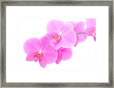 Orchid Isolated Framed Print by Michal Bednarek