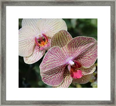 Orchid Two Framed Print by Mark Steven Burhart
